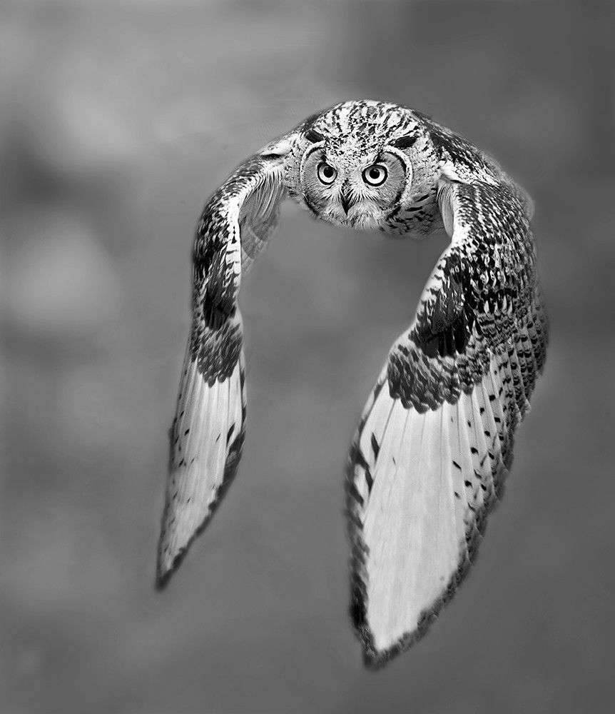 Photograph Black and white by Stefano Ronchi on 500px