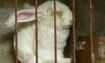 Definitely worth knowing, please read and sign. The Horror of Angora Fur & What One Care2 Member Did About It