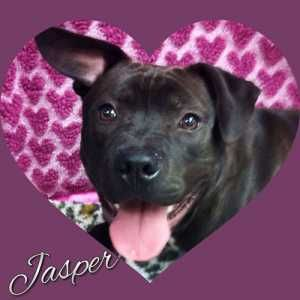 Possible Valentines Available At Atlantic County Animal Shelter Shelterdogs Petadoption Adoptdontshop Southjersey Animal Shelter Shelter Dogs Animals