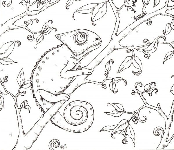 Chameleon Coloring Page MQVDA - Coloring Pages For Kids Jump Start - fresh realistic rhino coloring pages