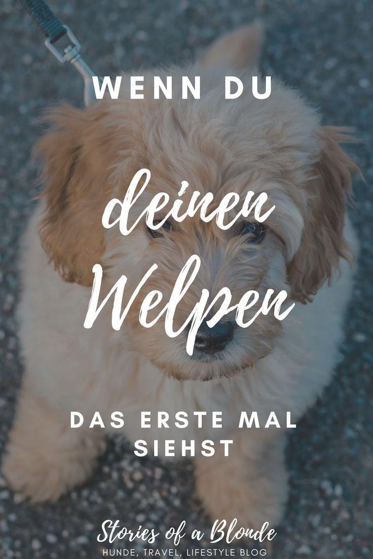Zu Besuch Beim Zuchter Welpen Hunde Welpenbilder