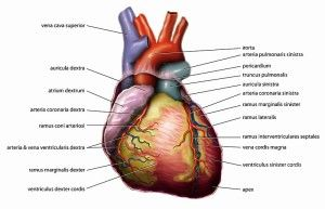 Anatomy and Physiology Study Guide   Anatomy and Physiology   Pinterest