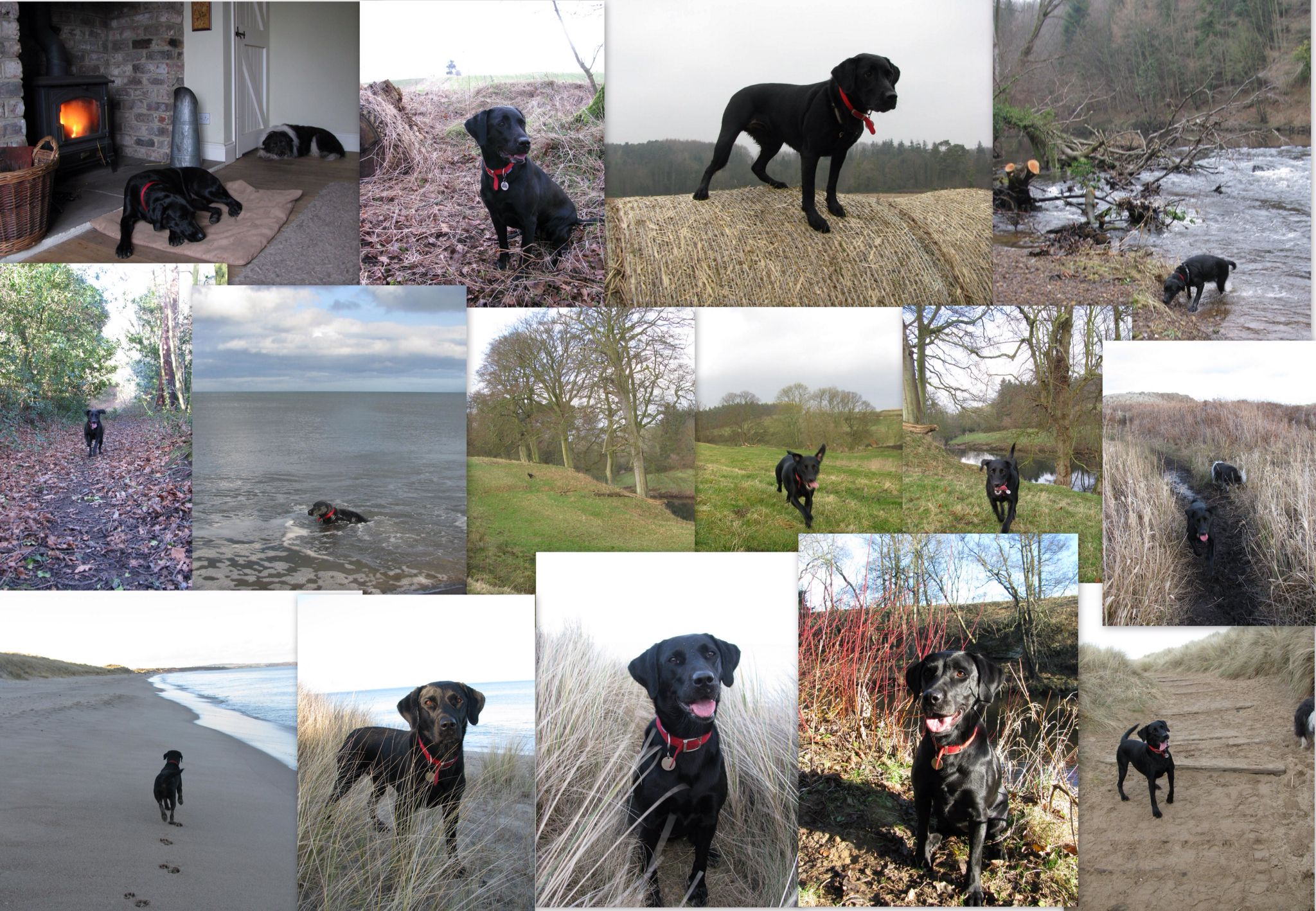 Olive the Labrador enjoying her #BarkingMad holiday. Dogs deserve a holiday too!
