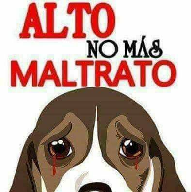 No Al Maltrato Animal Imágenes Kamila Animals Dogs Y Cats