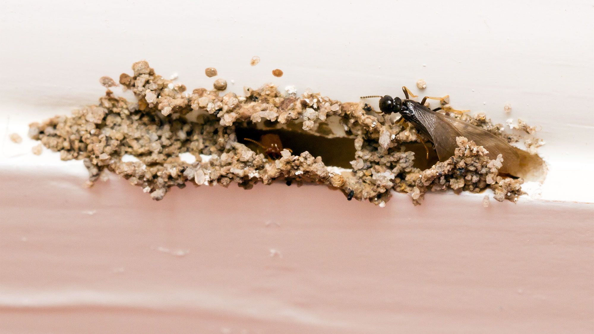 How to Prevent a Termite Infestation Ways to Keep These