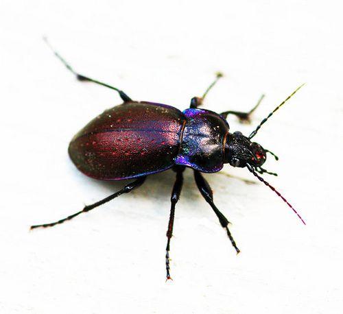 Nice Beetle.