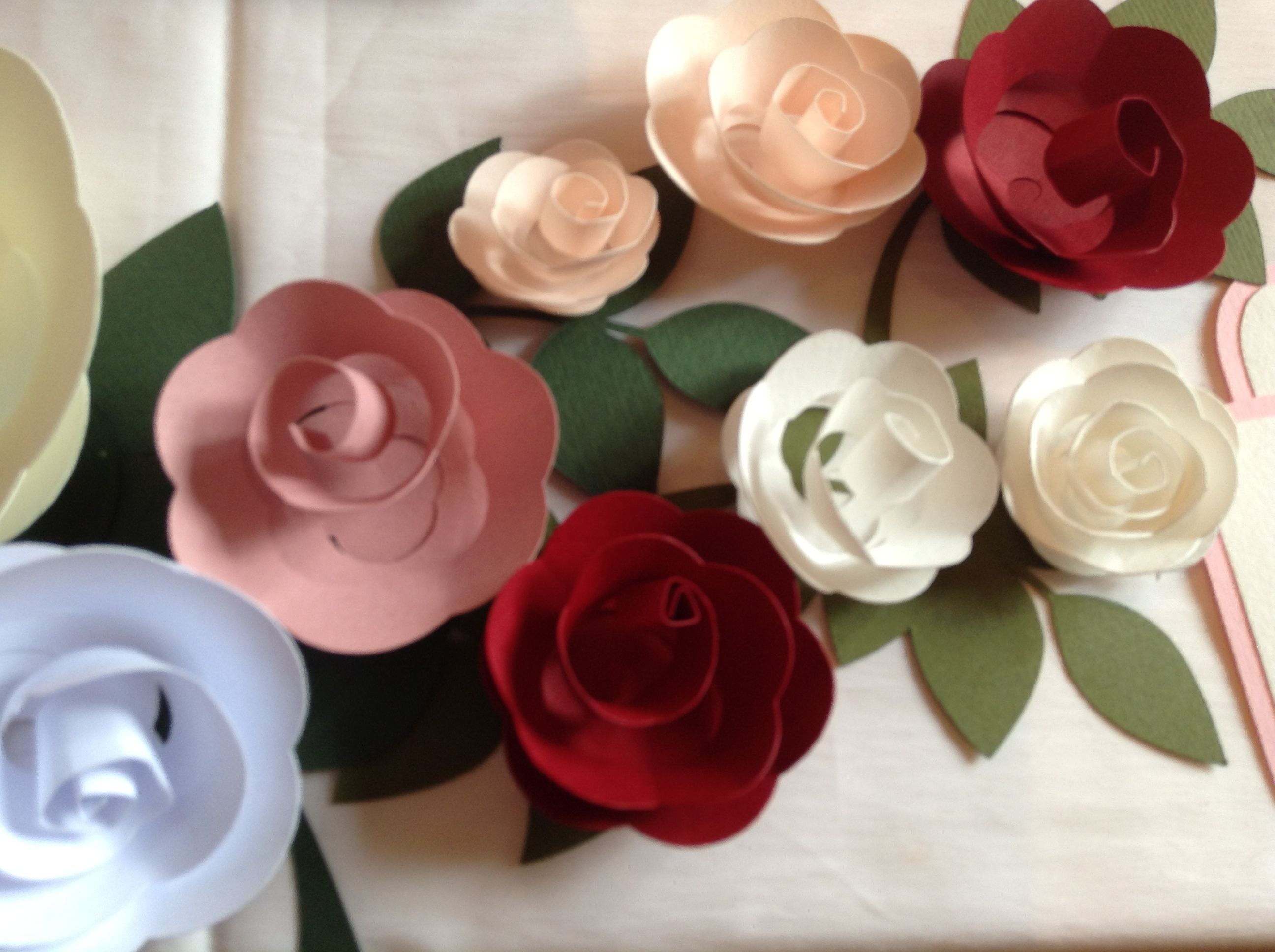 Rose di carta - Rosa rosae...