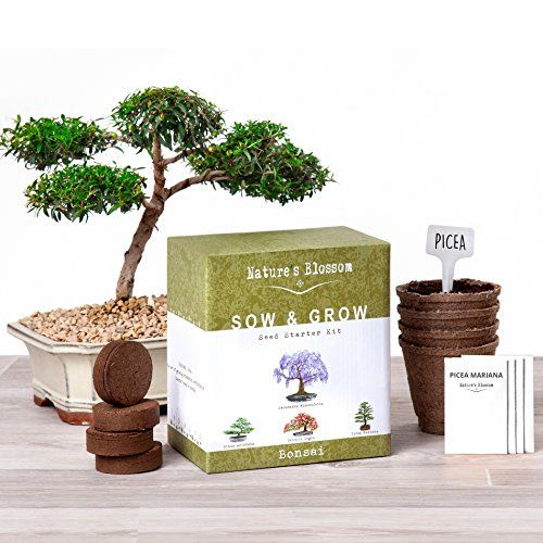 Naturess Blossom Sow And Grow 4 Bonsai Trees Germination Kit Want To Know More Gardening Hack Click On The Seed Starter Kit Planting Pots Bonsai Tree Types