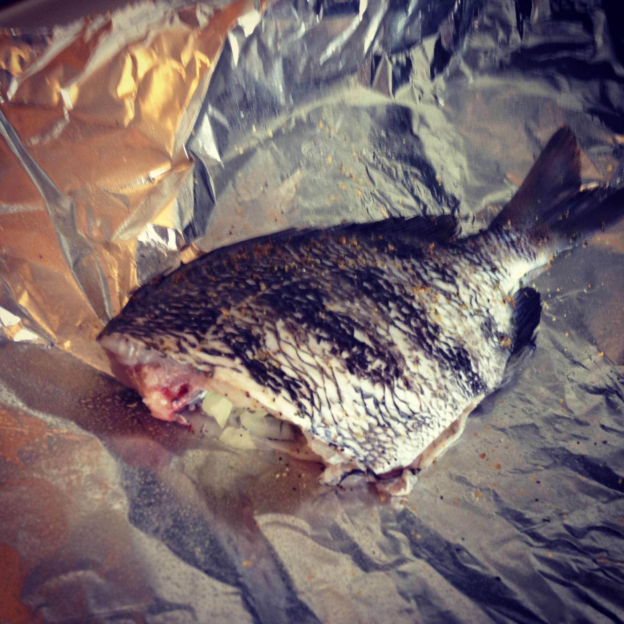 Stuffed sheepshead my own creations pinterest for Sheepshead fish recipe