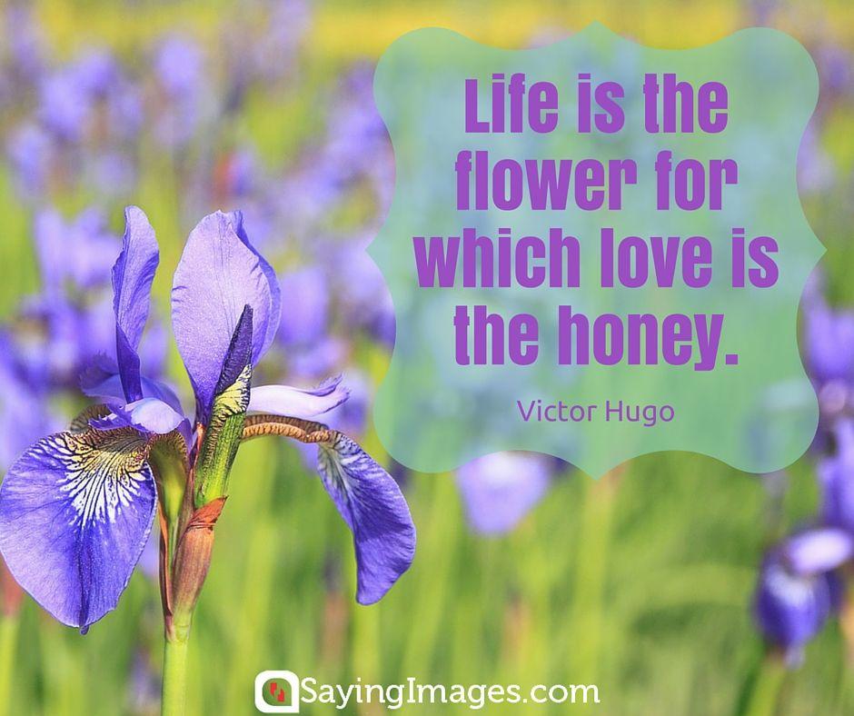 42 Beautiful Flower Quotes Sayingimages