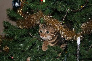 A small gang of authors cats and christmas tree safety funny