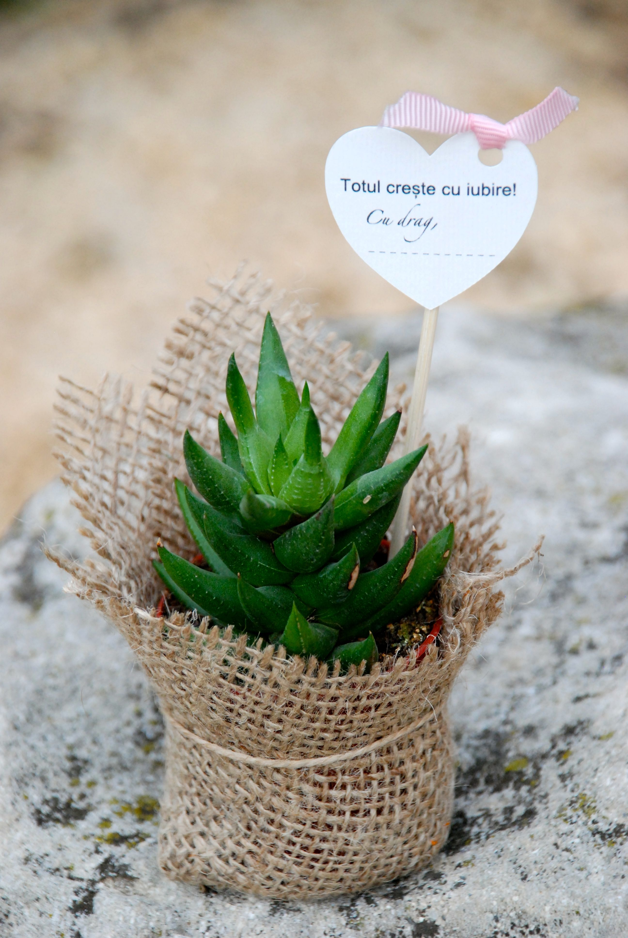 Suculente marturii succulents favors weddingplants