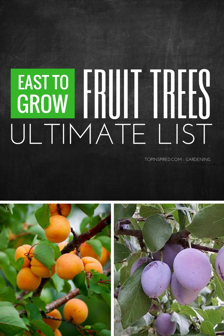 Top 10 Easy To Grow Fruit Trees Fruit Trees Growing Fruit Fruit Garden