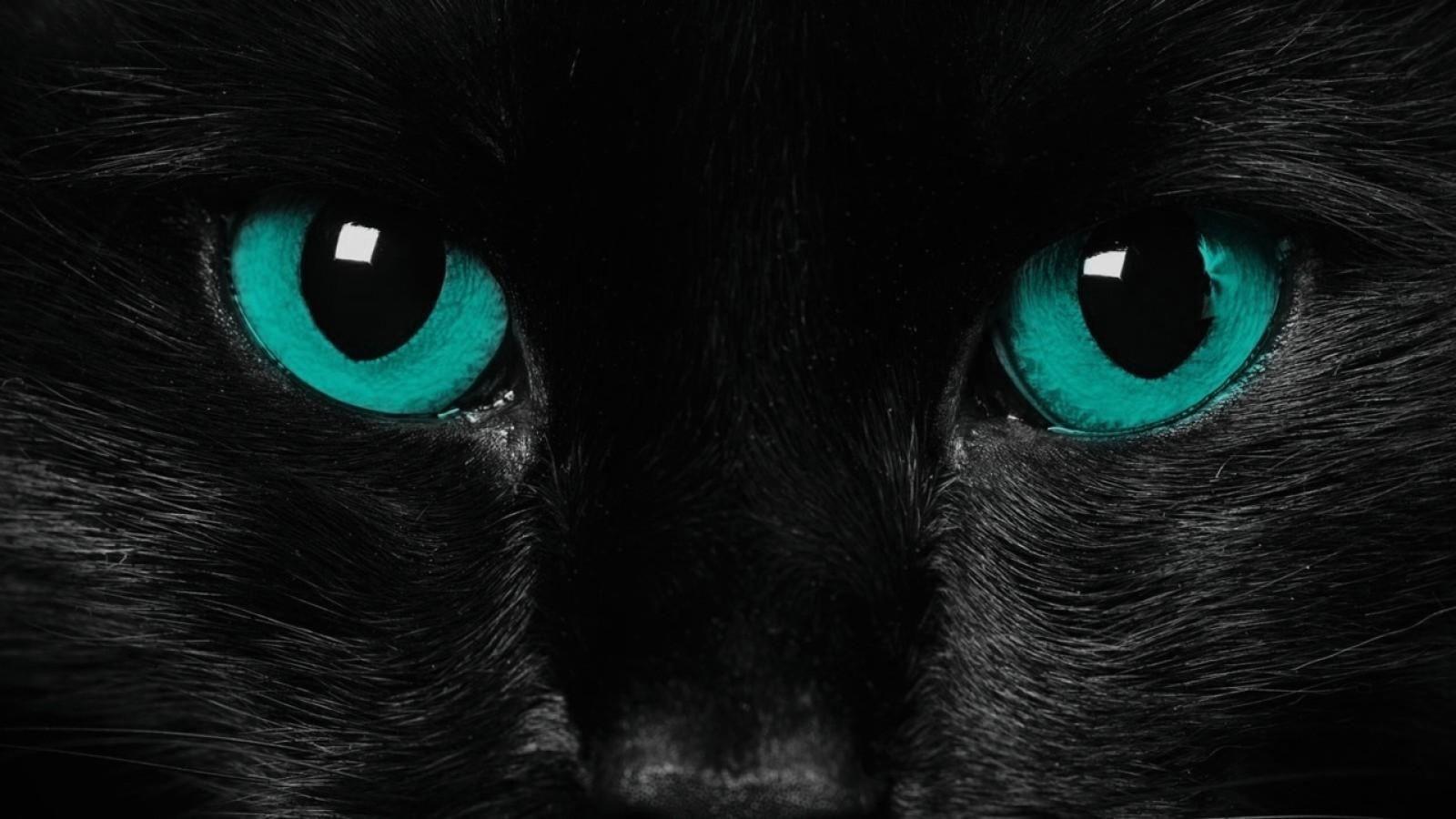 Black Jaguar Wallpapers Wallpaper 1024 768 Black Jaguar Wallpapers 55 Wallpapers Adorable Wallpapers Cat With Blue Eyes Blue Cats Beautiful Cats