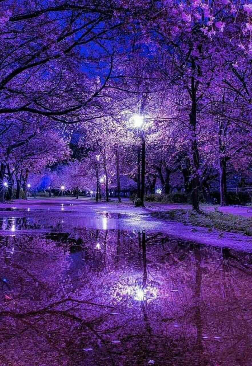 Pretty Purple Beautiful Nature Wallpaper Fantasy Landscape Beautiful Nature