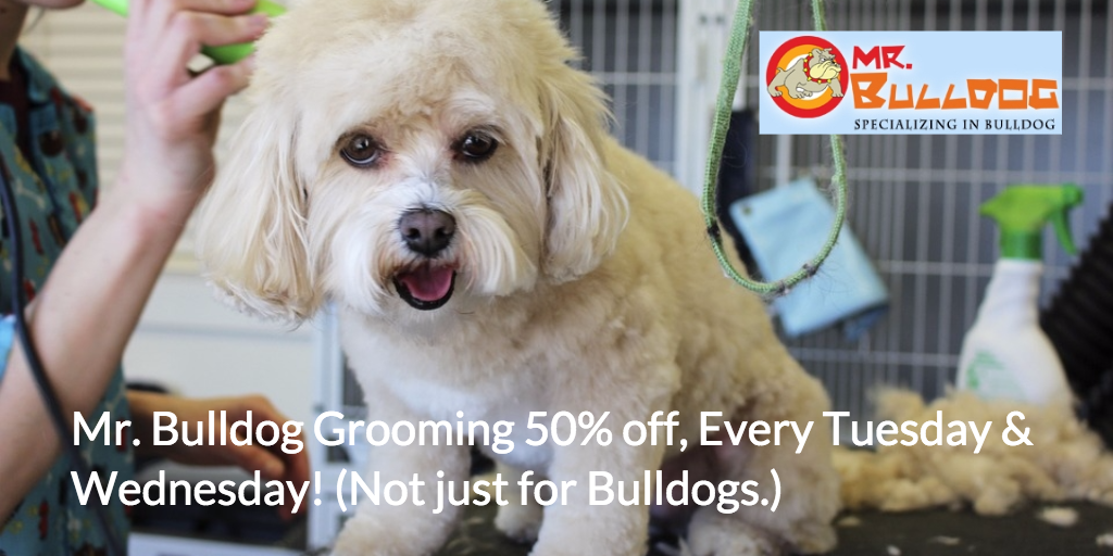 Mr Bulldog Grooming 50 Off Every Tuesday Wednesday Not Just For Bulldogs Visit Our Website For Mo Pet Grooming Pet Grooming Business Bulldog Grooming