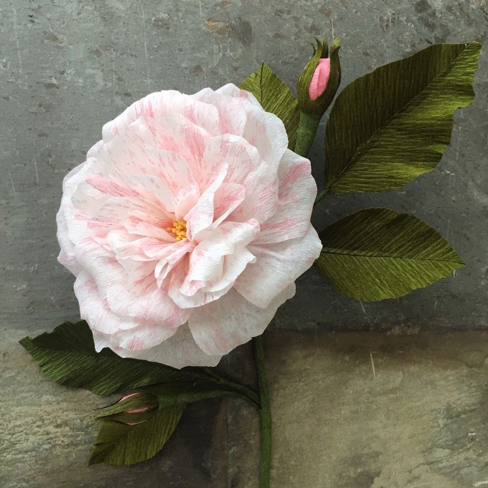 paper flowers | Suzonne Stirling
