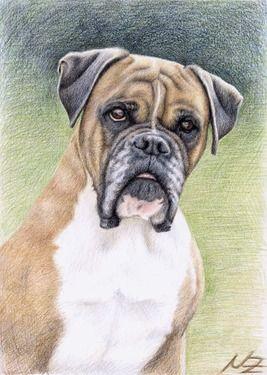 """Saatchi Online Artist Nicole Zeug; Drawing, """"Boxer Portrait"""" #art"""