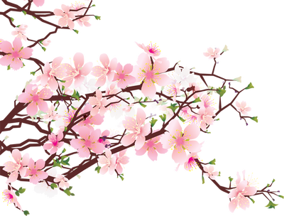 cherry blossom clip art free clipart best paintings pinterest rh pinterest com Mulan Cherry Blossom Clip Art Mulan Cherry Blossom Clip Art