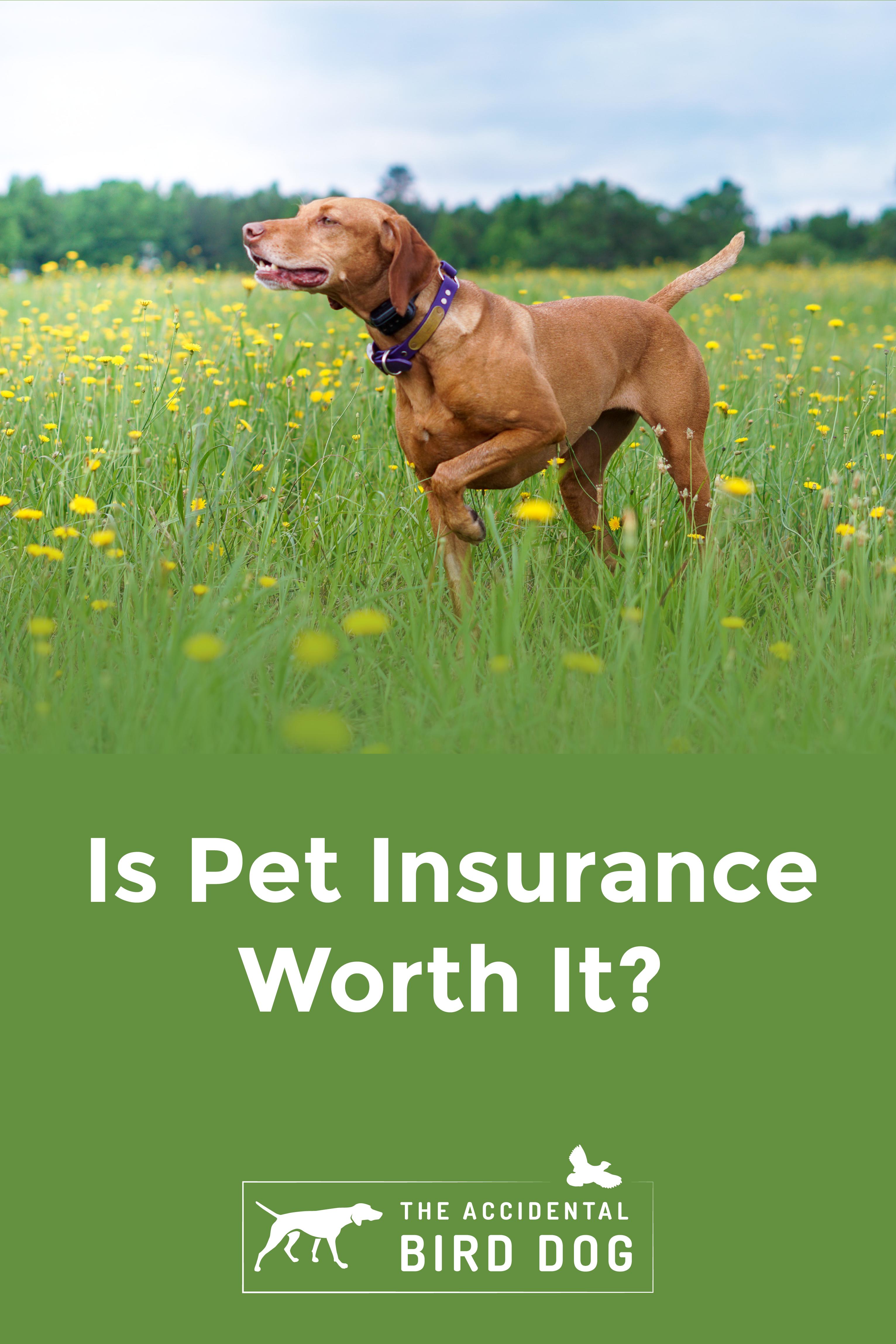 Is Pet Insurance Worth It In 2020 Pets Pet Insurance Dogs