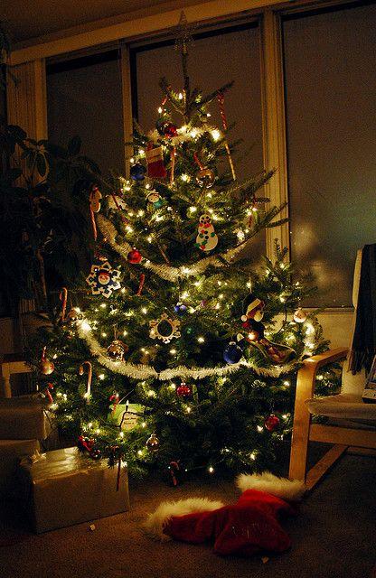 Keep Christmas Trees Fresh All Season Long. DiY tree ...