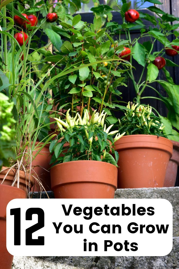 Vegetables In Pots The Best Veggies To Grow In Containers 400 x 300