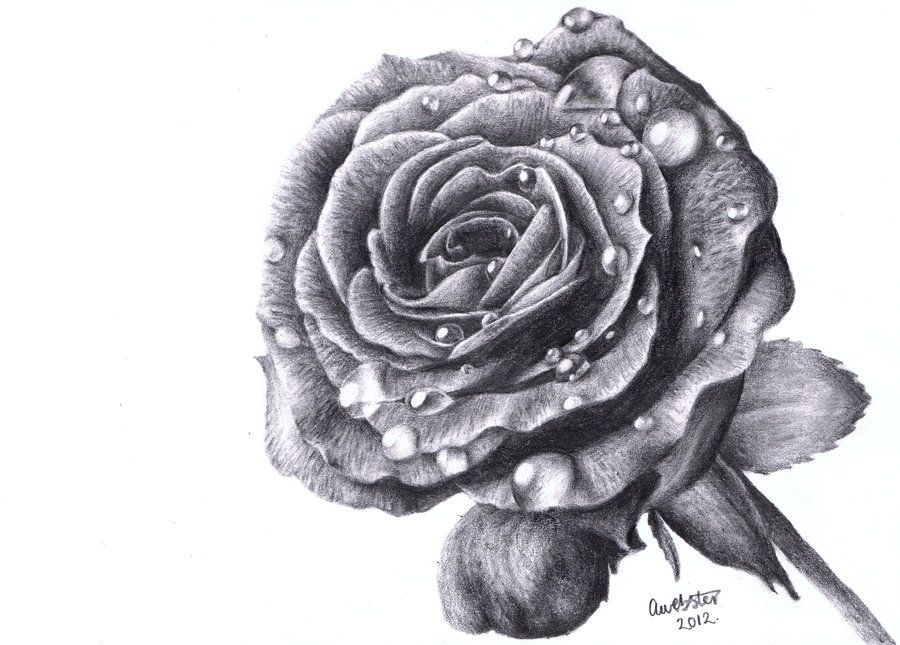 Rose Drawings In Pencil | pencil drawings of babies erwinnavyanto ...