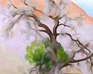 Pinons with cedar