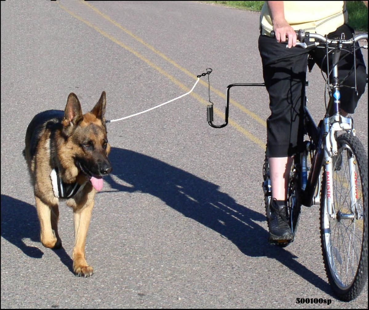 Springer Bike Attachment For Dogs I Need This For Flex It S