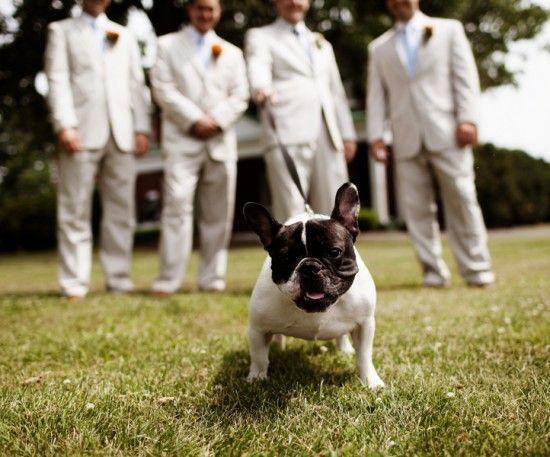 French Bulldog In A Wedding Washington Dc Weddings Maryland