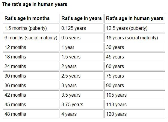 Rat To Human Age Conversion Chart Rats Life Expectancies Are Not That Long Due The Years Ratio I Wish It Wasn T So But Is