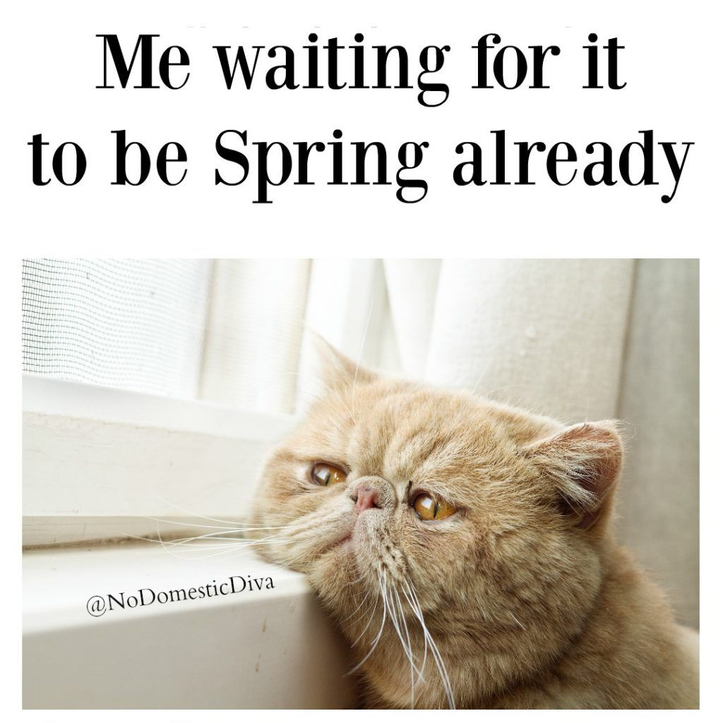 This Is My Life Right Now Waiting For Spring To Happen April 21st People I Don T Think It S Coming Funny Grumpy Cat Memes Grumpy Cat Quotes Cat Jokes