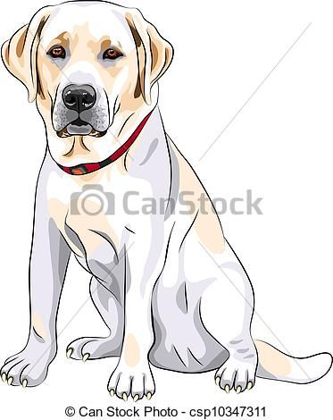 Vector Vector Sketch Yellow Dog Breed Labrador Retriever Sitting
