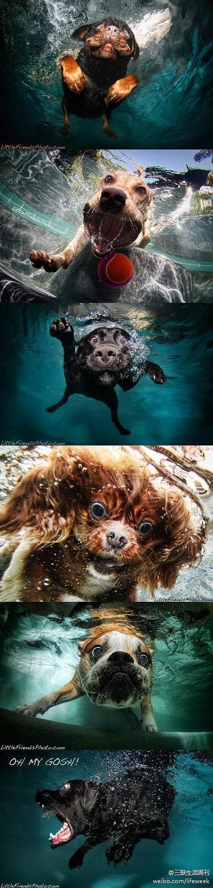 Animals underwater... lol