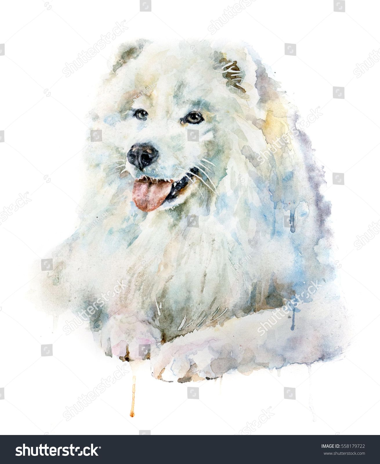 Watercolor Portrait Of White Dog Samoyed Isolated On White