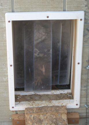 Electric Fence And Chicken Door Coop Update Coops Fences And