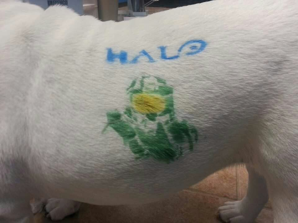 Halo Dog With Images Pet Resort Pets Creative Grooming