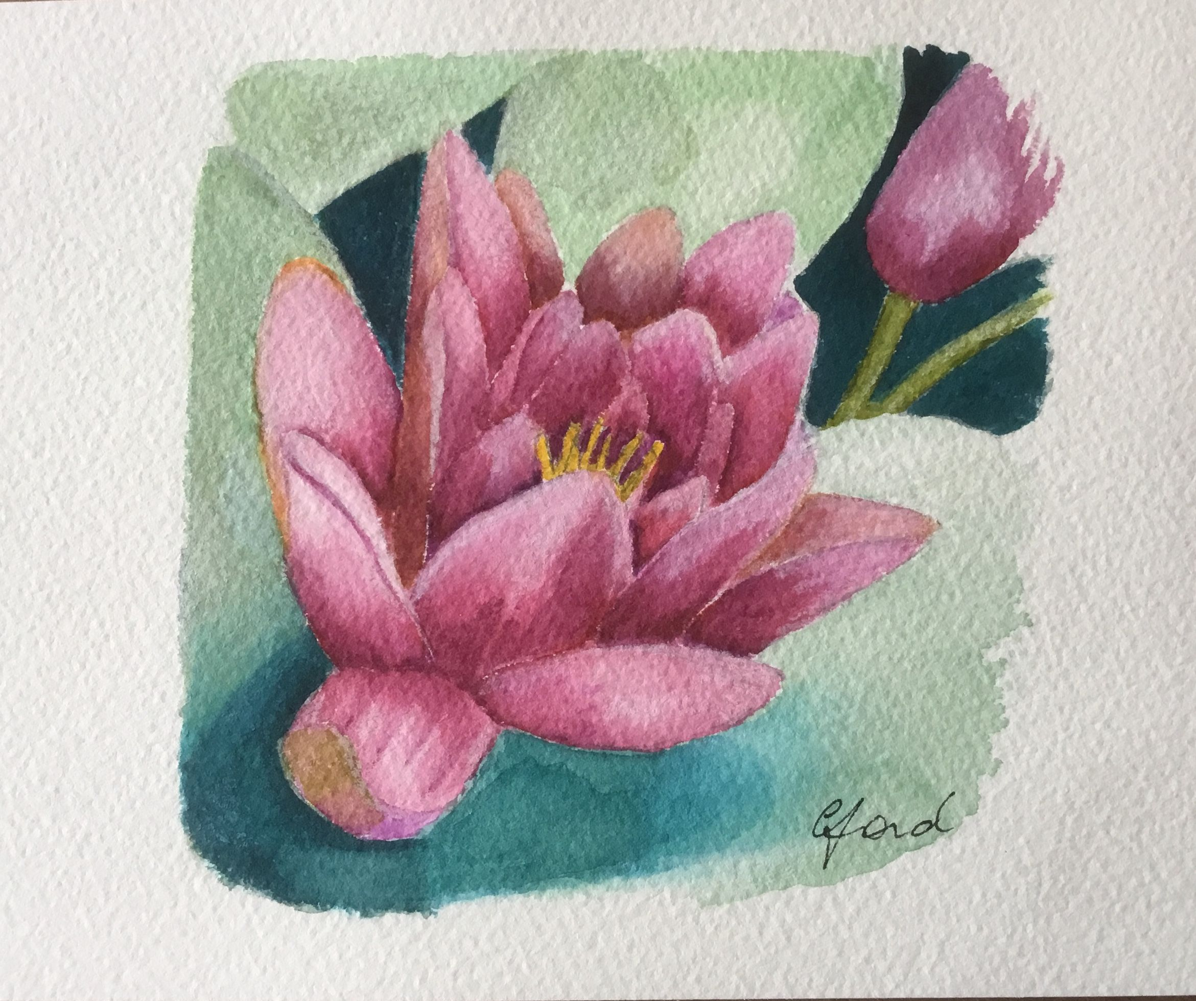 My First Attempt At A Water Lily And Using Winsor Newton Water
