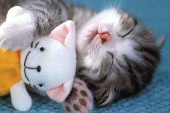 20 Cute & Funny Animal Sleeping Positions - cute animals funny, sleeping animals #cutecreatures