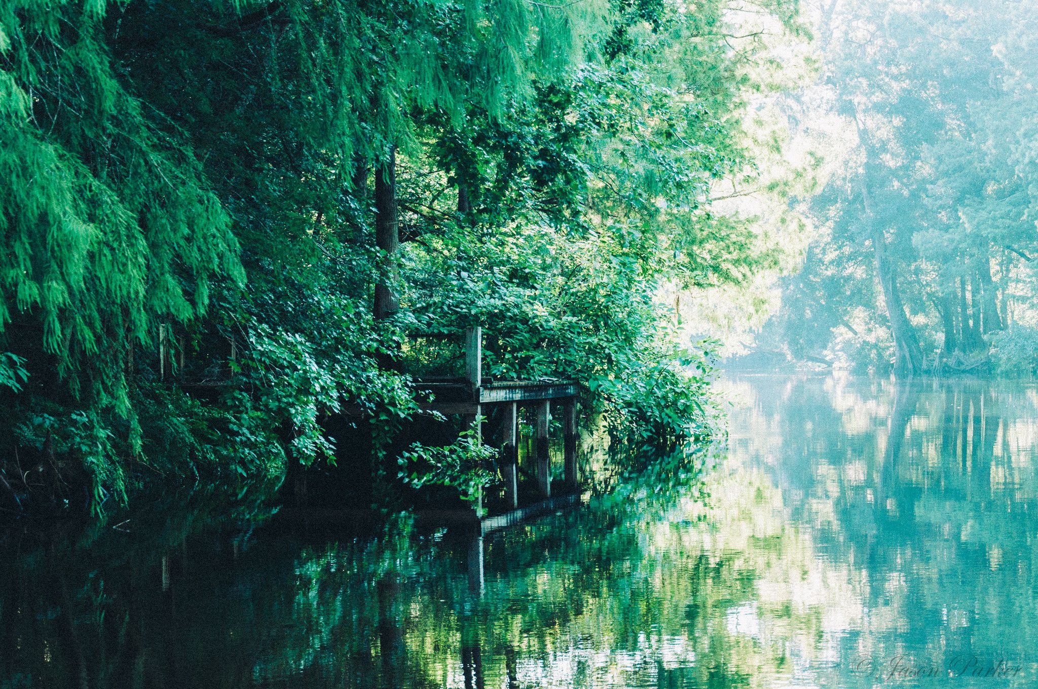 https://flic.kr/p/oEvSQX | Withlacoochie River | Withlacoochie River near Dunnellon, FL.  Taken from Captain Mike's Lazy River Tours.