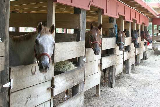 Expensive horse stables bing images dream stable for Horse farm