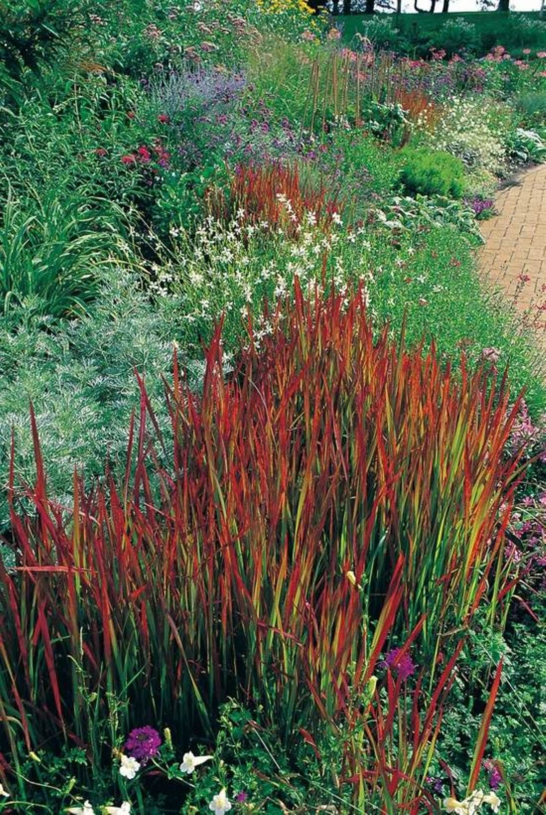 decorative grasses for landscaping | Garden Landscaping with ...