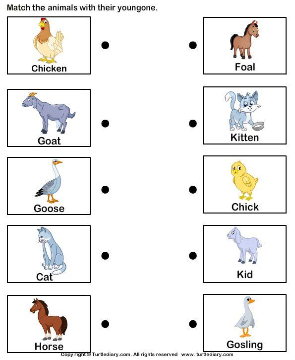 Pin by Vicki Elbon on classroom ideas Baby farm animals, Farm