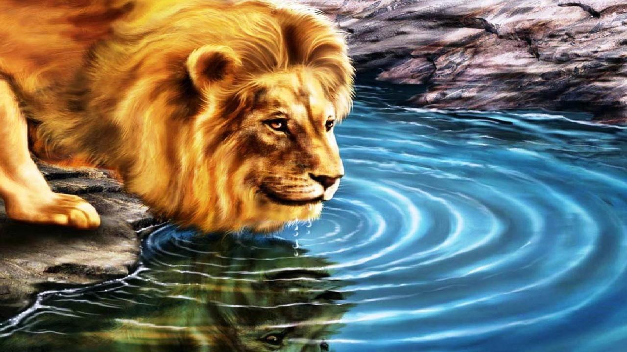 Thirsty lion 3d hd wallpaper 3d hd wallpapers lion - 3d animal wallpaper ...