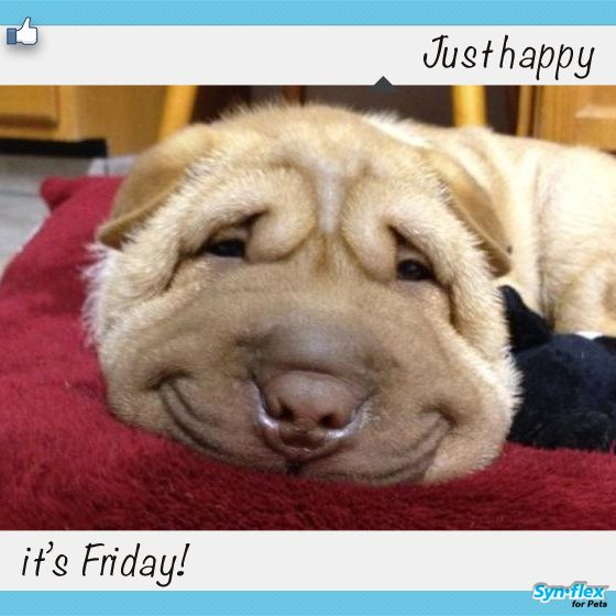 TGIF! This pup is happy! It's a beautiful weekend and hopefully fun things planned with kids and pups!!