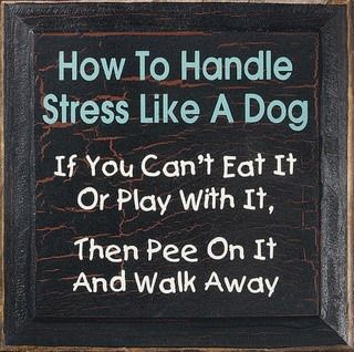 Handling stress like a dog
