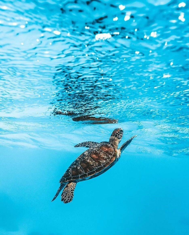 7c616d69d7 Sea Turtle