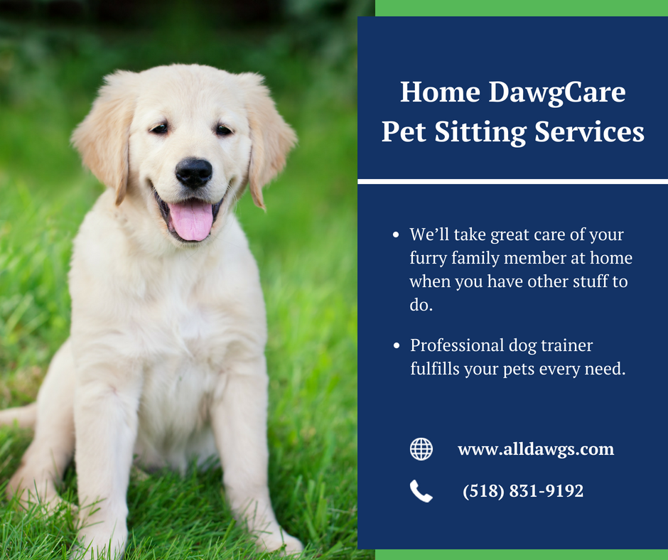 All Dawgs Expert Albany Dog Trainer Provides Professional Affordable And Reliable Pet Sitting Walking Pet Boarding And Dog Clinic Dog Training Near Me Dogs
