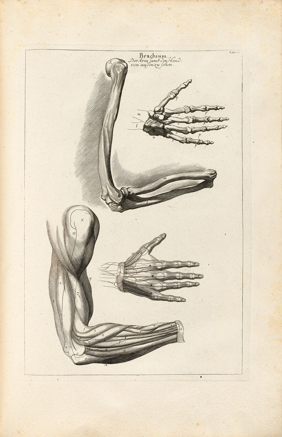 Outside view of right arm and hand | Creative | Pinterest | Arms ...