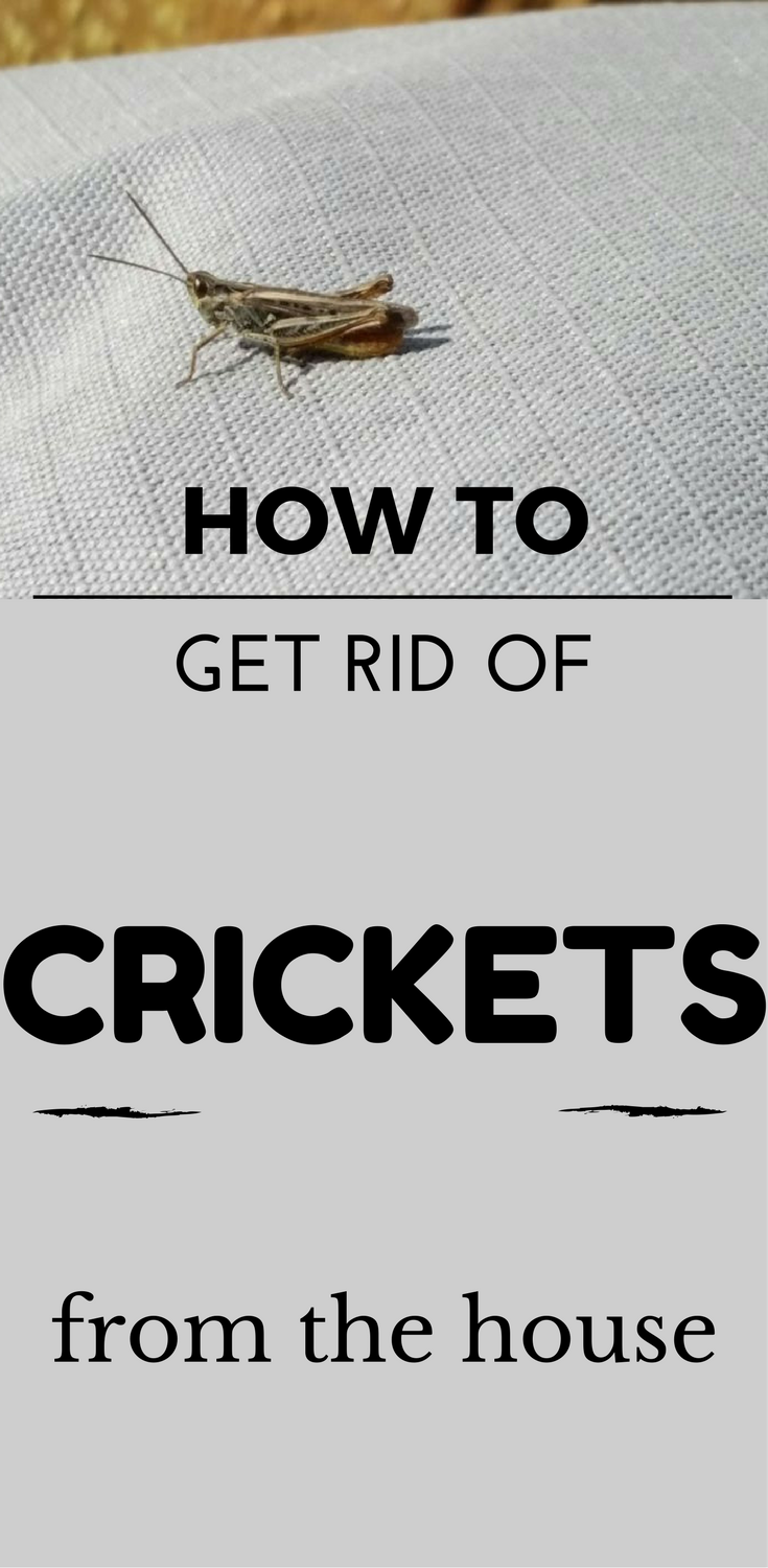 How To Get Rid Of Crickets From The House 101cleaningsolutions Com Getting Rid Of Crickets How To Get Rid Termite Problem